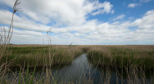 A modern marshland: On the edge of the North Sea